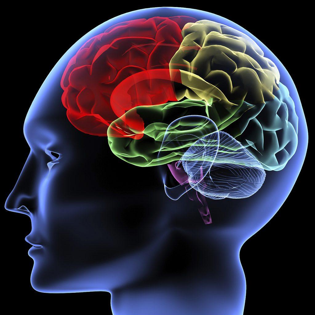 syaraf-otak